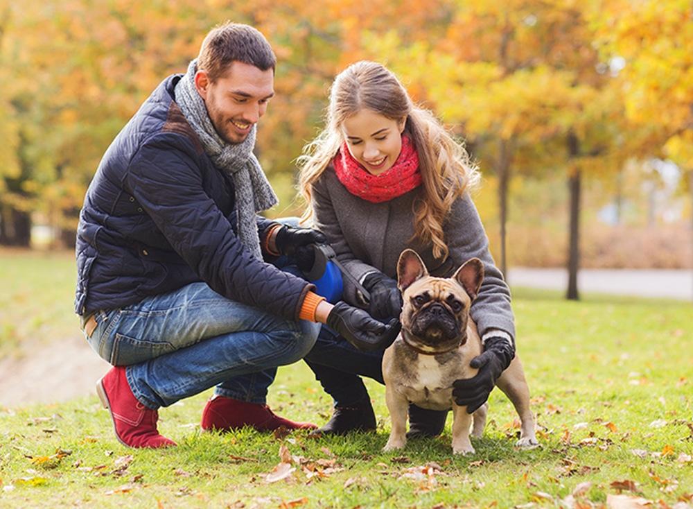 Don't Get Bitten  Make Sure Your Pet Insured